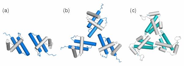 Modely oligomerů.