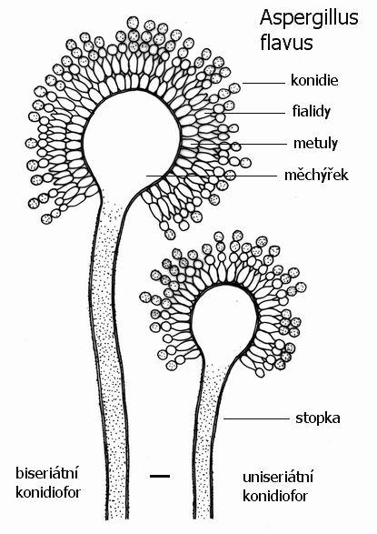 miniatlas mikroorganism u016f